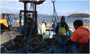 This Year's Oyster Harvest Was a Bumper Crop