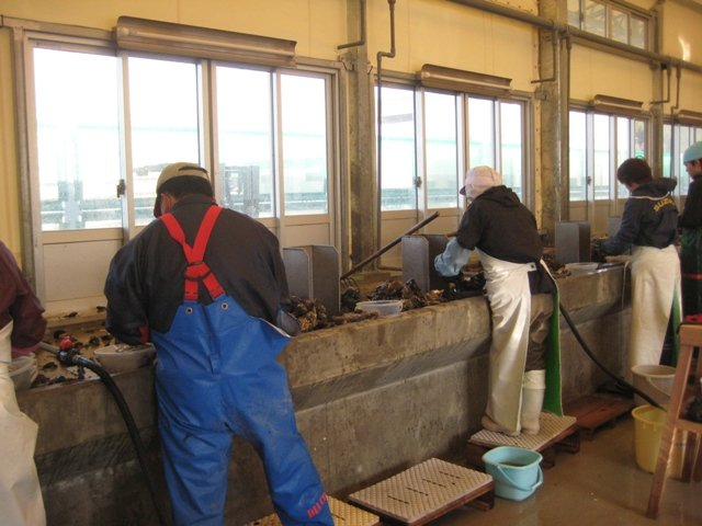 Inside of the Oyster Processing Facility