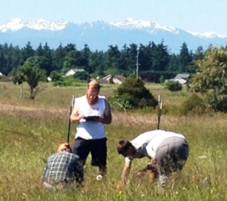 Summer interns & staff counting Golden paintbrush