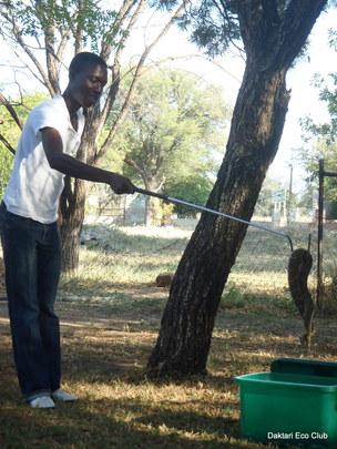 Kutullo catching a puffader