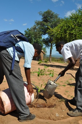 Eco Club kids planting and watering the new trees.