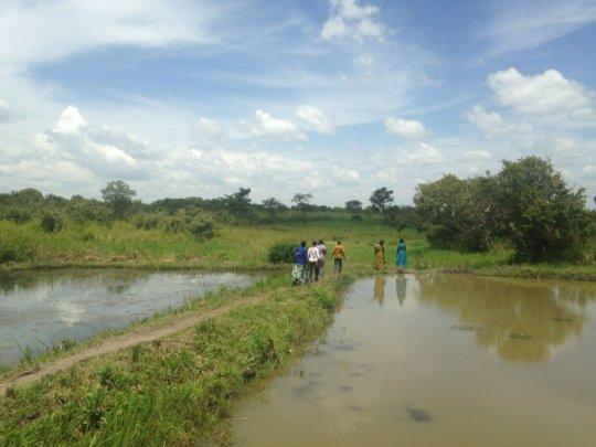 Josephine's tilapia farm project...