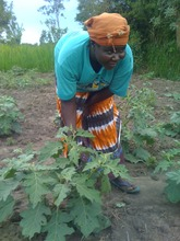 Women Farmers, feeding their communities