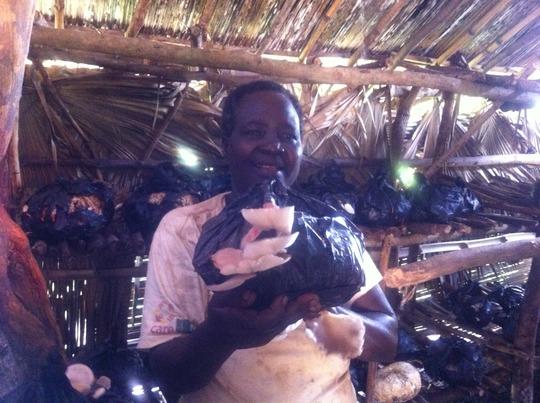 growing mushrooms in Gulu