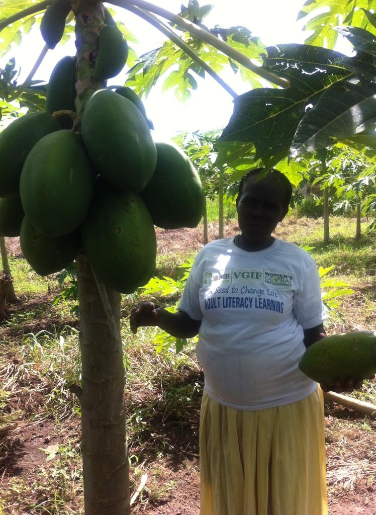 Mango grove, bananas, papayas too!