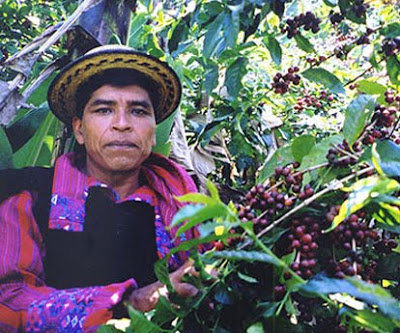 An example of a coffee farmer from Guatemala.