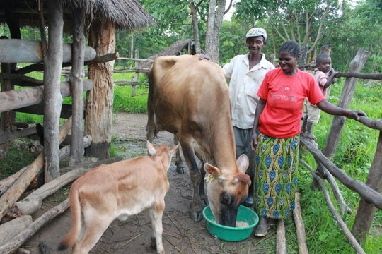 Belinda and John with cow and calf