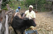 Copperbelt Livelihood Enhancement Project - Zambia