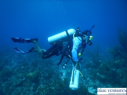 Team member conducting lionfish survey