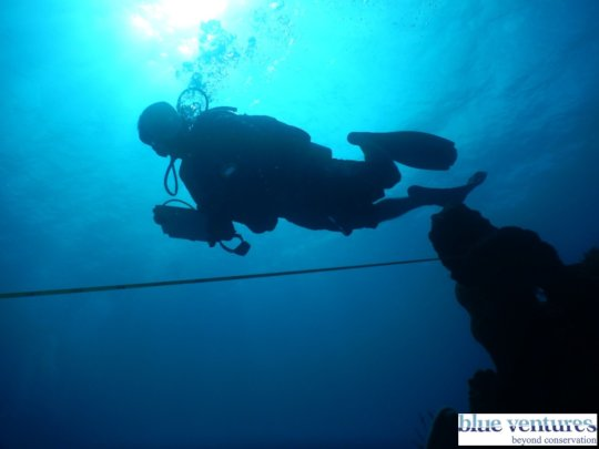 Blue Ventures surveyor running a transect line