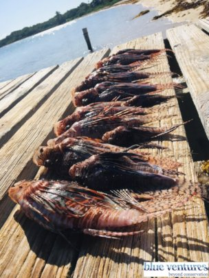 Results of a successful lionfish culling training