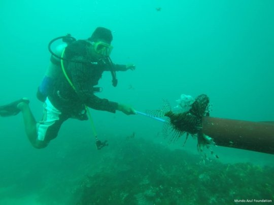 community member hunting lionfish