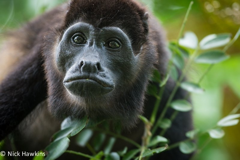 Support Crucial Conservation in Costa Rica