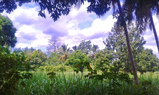 Beautiful countryside surrounding Port-au-Prince