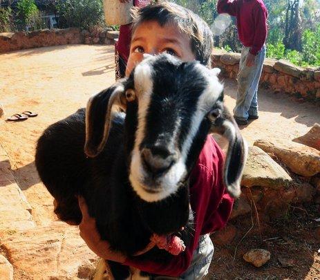 WACN boy with goat.
