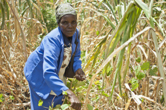 Cecilia Mwangi - ActionAid International