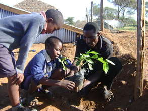 Students plant seedlings - Kenya Rainwater Assoc.