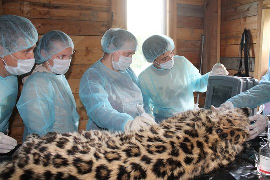 (c) Inspection Tiger
