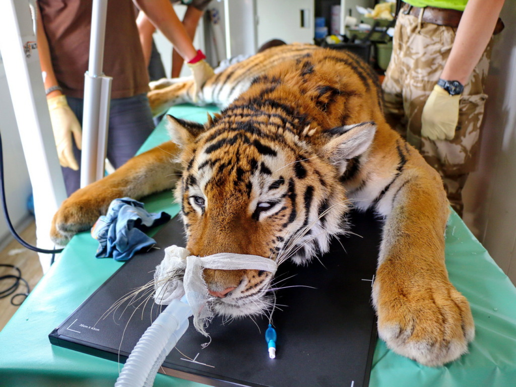 Medical check-up (c) Land of the Leopard NP