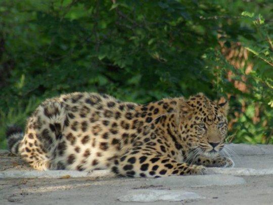 (c) Land of the Leopard National Park