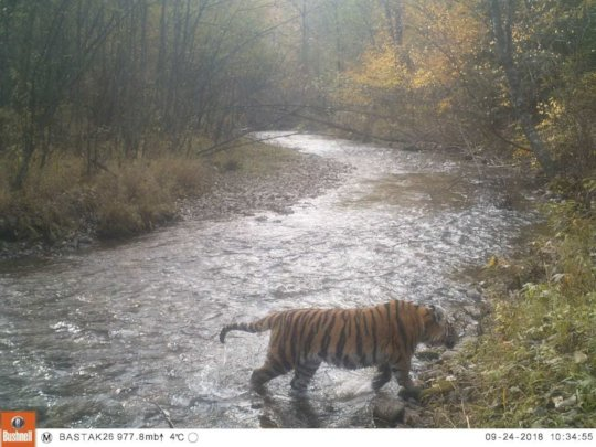 (c) Bastak nature reserve