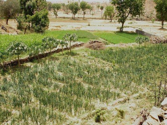Regenerated Land
