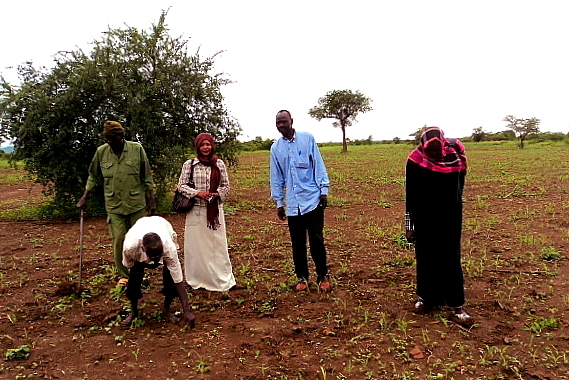 Land preparation and sowing practice
