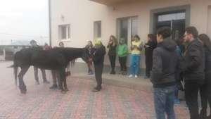 Equine veterinary education day Center of Hope