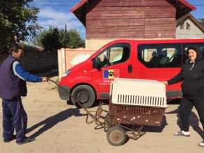 Rural village spayathon teaches welfare
