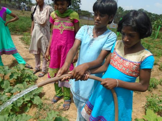 Children watering the vegetable garden