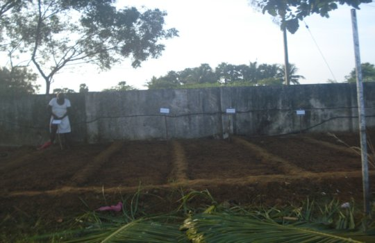 Preparing the ground to sow seeds