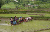Ensure Food Security Through Sustainable Practices