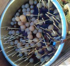 1,000 ball konjac sticks