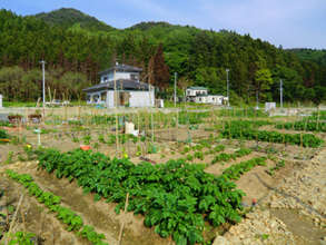 Result of all the efforts. Vegetables grow nicely