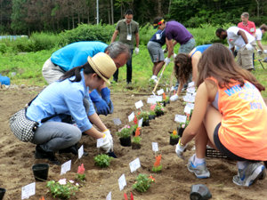 Students from Princeton University volunteering