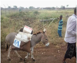 Donkeys transporting material to rural health post