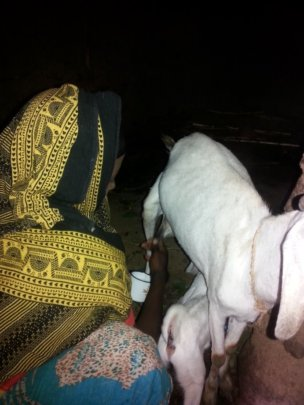 Goat's milk can have many nutrients for children