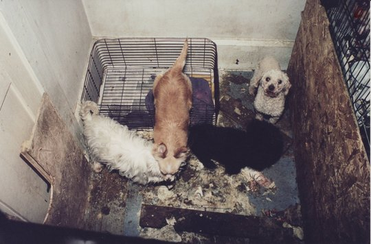 the cruelty of puppy mills in Buyer beware: the problem with puppy mills and backyard breeders support laws that protect animals from puppy mill cruelty-tell your elected officials you support laws which cap the number of animals a person can own and breed.