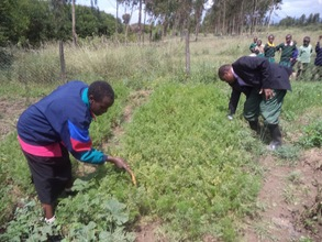 Nyonjoro Primary School garden- plenty of carrots!