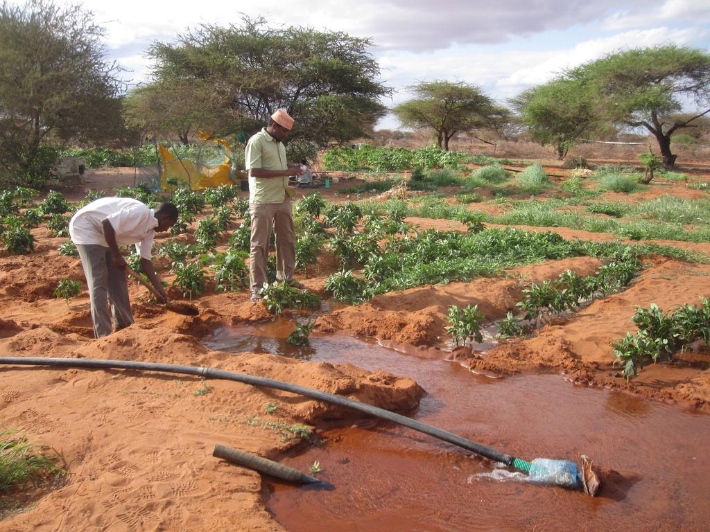Improving the livelihoods of Kenyan pastoralists