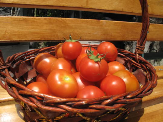 Wonderful harvest from the greenhouses!
