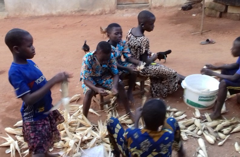 Learning the important task of dehusking maize