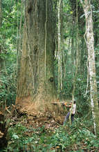 The forest is an economic resource