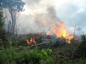 Burning forest creates greenhouse gas emissions