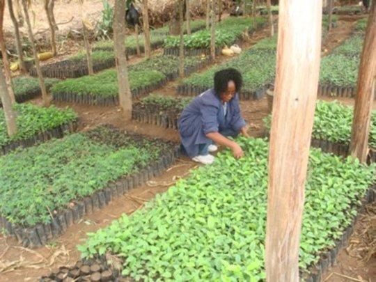 Extended tree nursery with over 30,000 seedlings