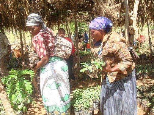 Farmers pick up their seedlings