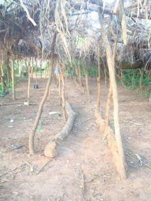 Tree nursery sits empty - all seedlings given out