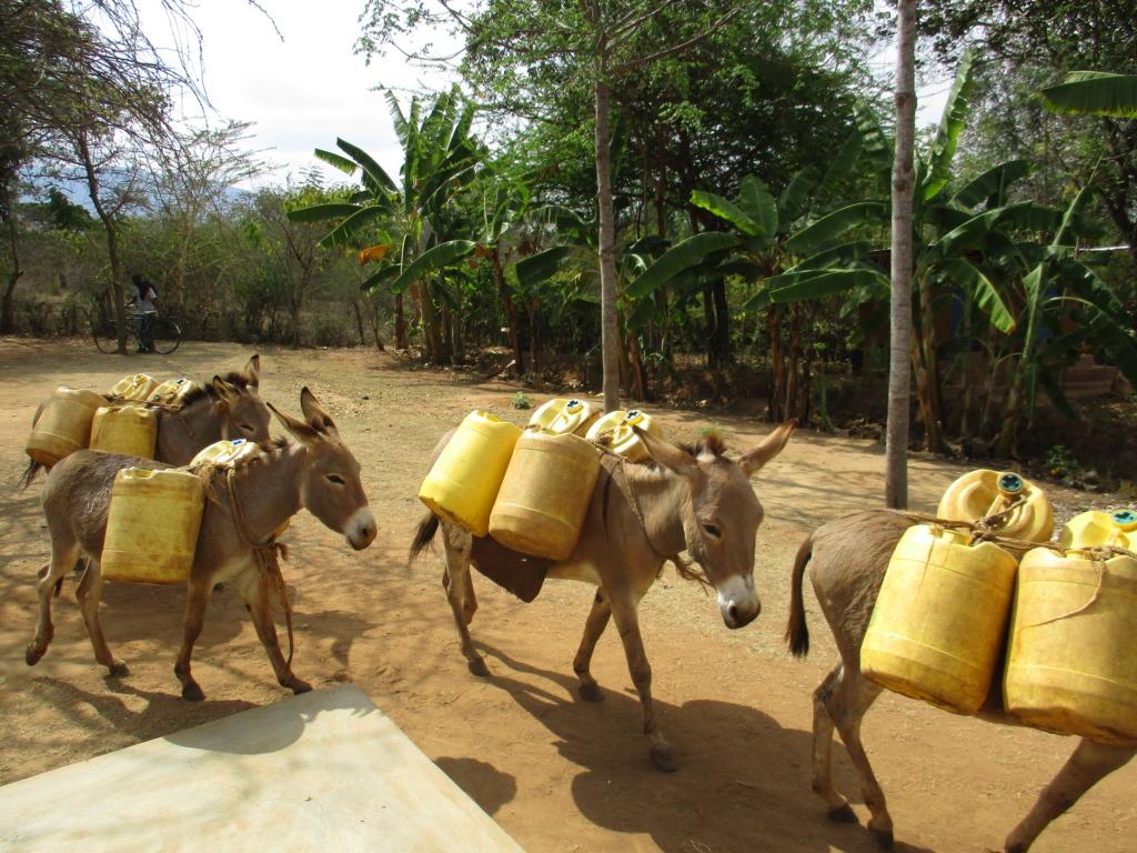 DNRC Donkeys fetching water