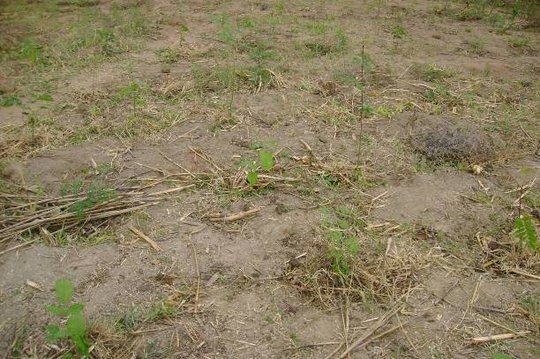 Dan Mwenda - Newly Planted Saplings (Oct 2011)