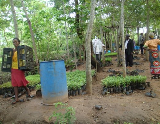 Farmers carrying away their new tree seedlings